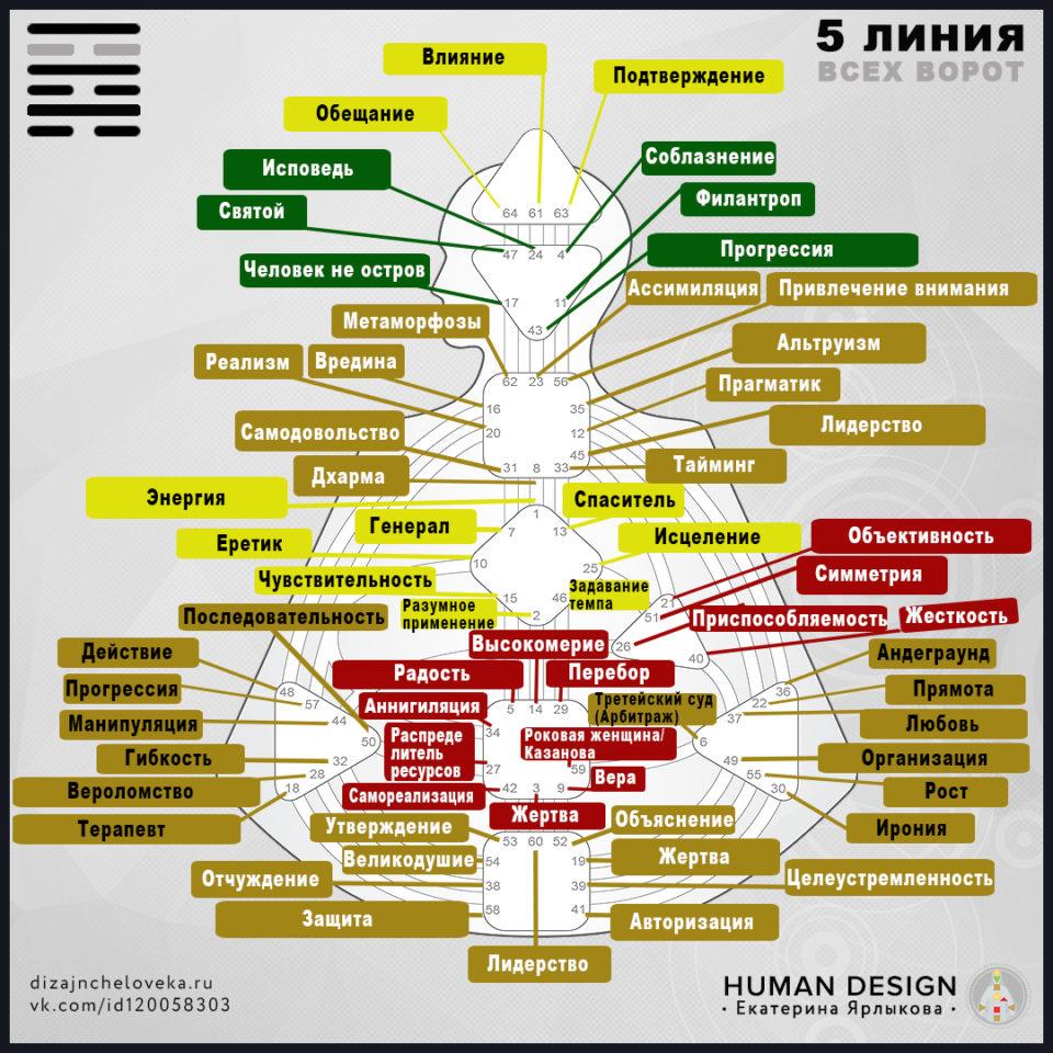 5-linija-dizajn-cheloveka