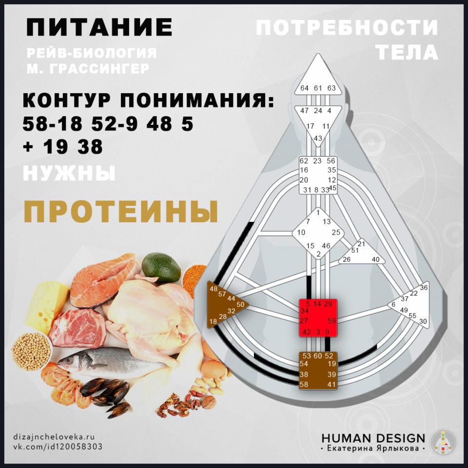 pitanie-proteiny-dizajn-cheloveka