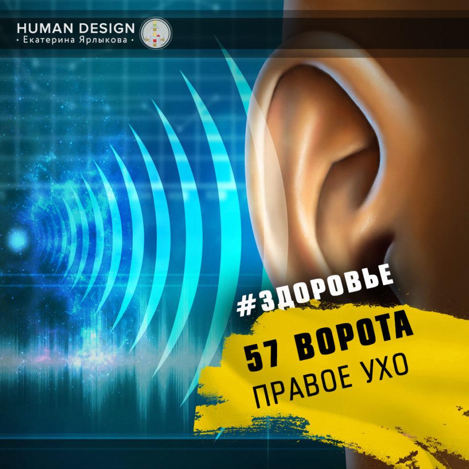 57 Ворота Human Design — Дизайн Человека 57 Ворота — Ворота Правого Уха.